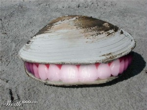 happy-clam